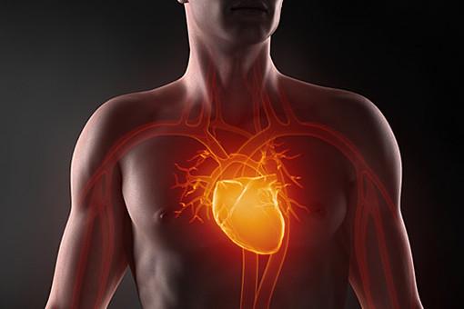 сердце в груди картинка